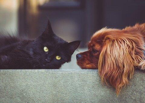 Bijverdienen naast pensioen met huisdieren