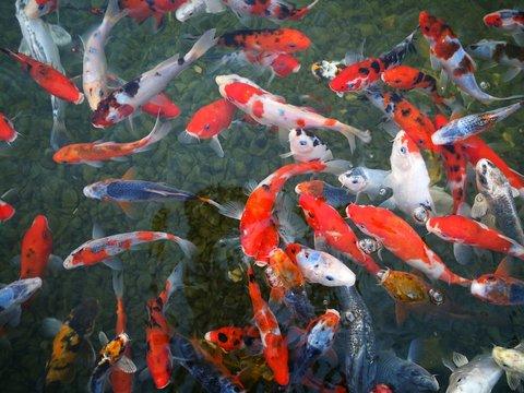 Geld verdienen met vissen kweken